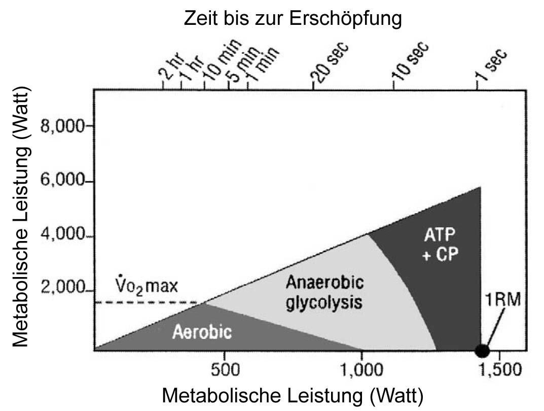 metabolische leistung