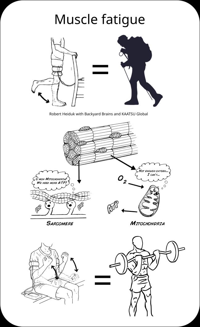 Muskelermüdung im Vergleich